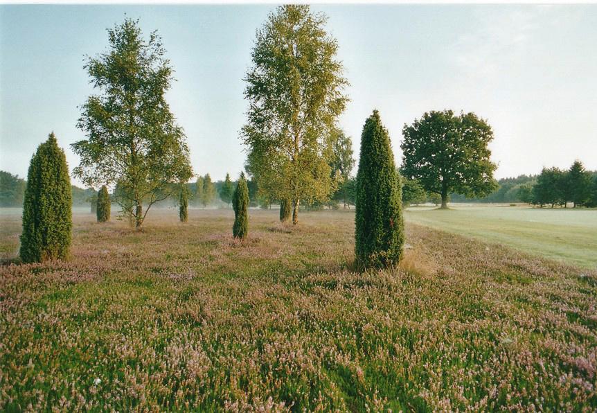 Der Golfplatz liegt inmitten der Lüneburger Heide. (Quelle: GC St. Dionys)