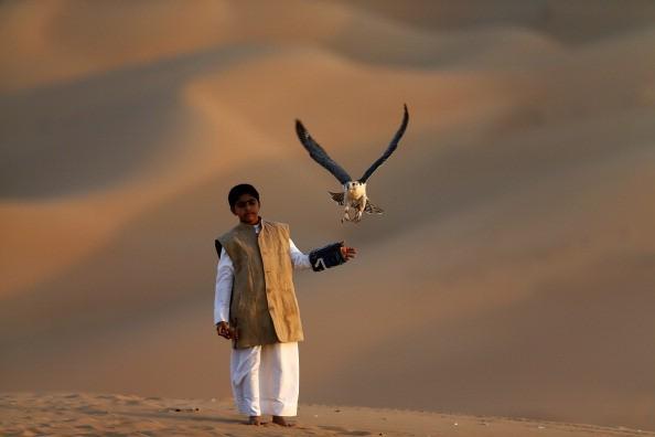 <h2>Der Flug des Falken</h2> Majesttätisch steigt er in die Lüfte: Der Falke hat in den Vereinigten Arabischen Emiraten einen ganz besonderern Stellenwert. Er ist Wappentier, Statussymbol und wird behandelt, wie ein Familienmitglied. Ein Exemplar dieses stolzen Vogels ist gut und gerne Mal 30.000 Euro wert. Und damit sich der Luftjäger mit den scharfen Augen nicht langweilt, geht es zum Freiflug häufig in die Dünen. <br>(Foto: Getty)