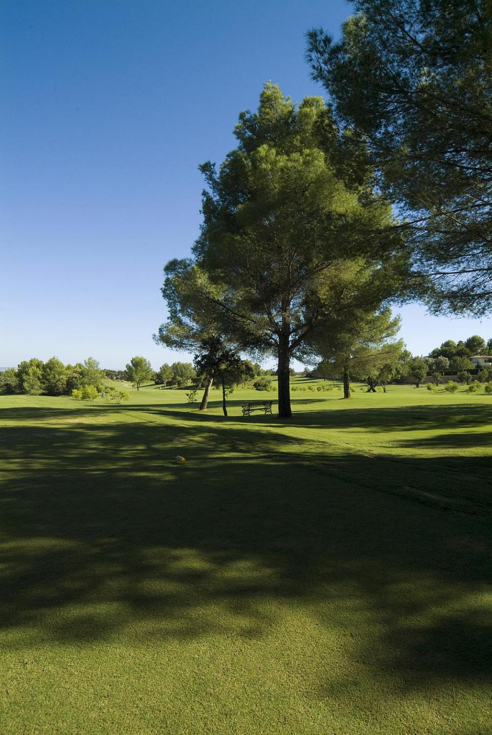 Der Golfplatz hat einen sehr alten Baumbestand vorzuweisen. Vor allem Kiefern findet man fast an jedem Loch auf dem Platz. (Foto: Arabella Son Quint)
