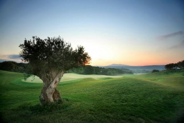 <h2>Das antike Loch 7 des Dunes Courses</h2>Die alten Olivenbäume gleichen den Marmorstatuen aus der griechischen Antike (Foto: Costa Navarino).