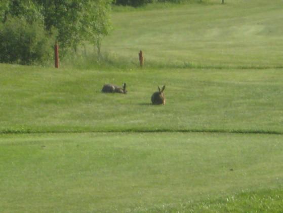 """.... sogar ein paar Wegbegleiter auf dem """"Big Apple Course"""". (Foto: JW)"""