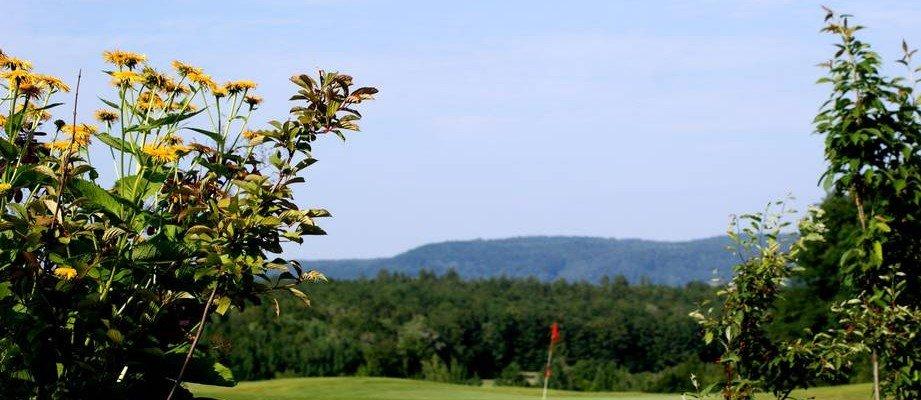 Blick auf ein Grün des Golfclubs Bamberg auf Gut Leimershof
