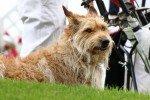 HuGo Cup - Golf mit Hunden