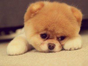 6945118-sad-puppy-face