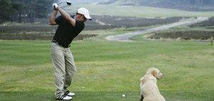 Zum Welthundetag: Nicht nur Paul McGinley genießt es, mit seinem Hund auf die Runde zu gehen. (Foto: Getty)