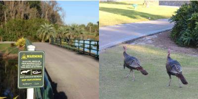 In Orlando warten neben Truthähnen auch noch weitaus gefährlichere Tiere auf die Golfer. (Foto: Golf Post)