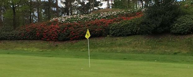 17. April 2017: Die Alpenrosen beginnen zu blühen und sorgen für Augusta-Feeling im Golfclub Herkenbosch! (Foto: Ulrich Sefrin)