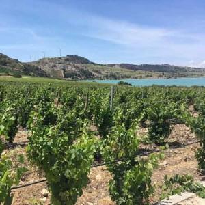 Das Weingut Planeta bei Menfi. (Foto: Golf Post)