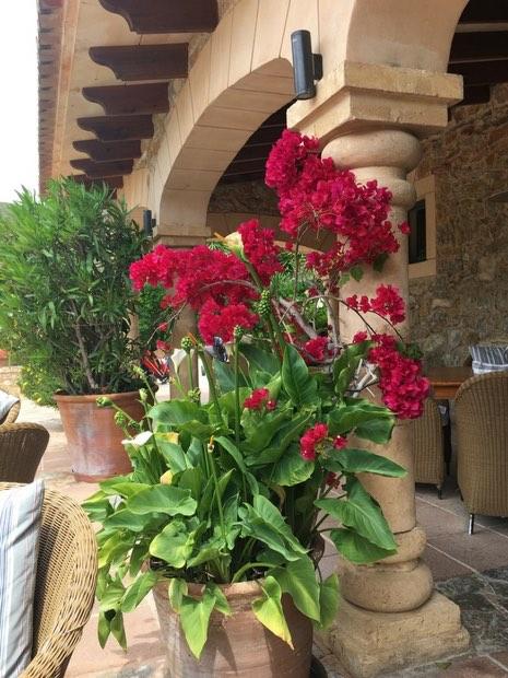 Prächtige Blumen und wunderschönes Ambiente - das ist die Terrasse des Capdepera Golfclub. (Foto: Golf Post)