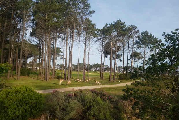 Springböcke im Hermanus Golf Club. (Foto: Kai Wunner)