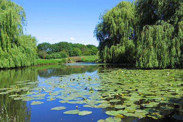 Seerosen zieren diesen Teich im GC Timmendorfer Strand. Sie belegen die Güte des Biotops. (Foto: Seeschlösschen Timmendorfer Strand)