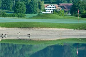 Golfclub Limpachtal