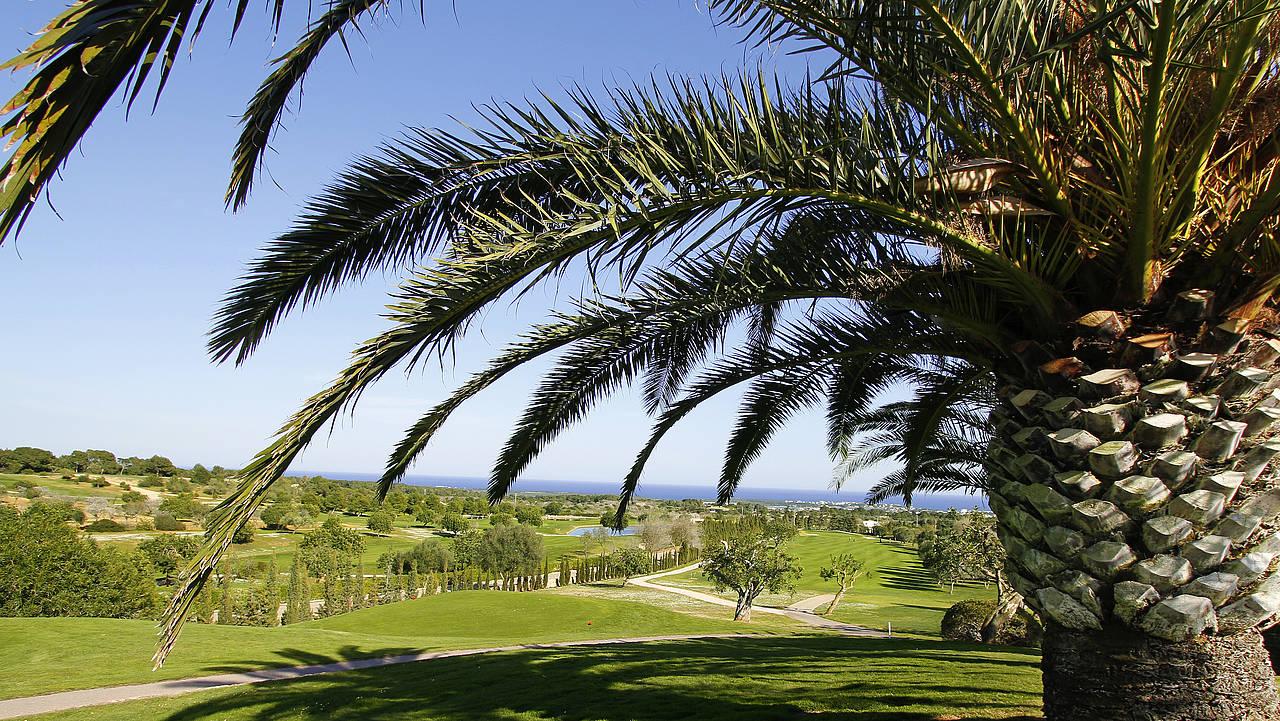 Golfen unter Palmen auf Mallorca. (Foto: ROBINSON)