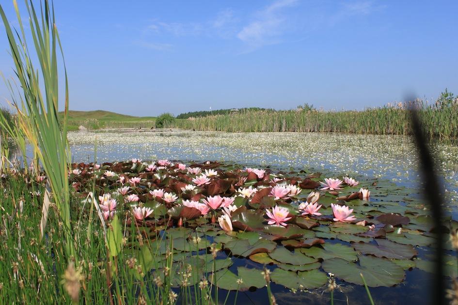 Ökosystem Teich: Filtern kann auch biodynamisch passieren. Foto: Ostsee Golf Resort Wittenbeck